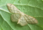 Riband Wave (R Leverton)